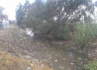 جفاف وتلف المحاصيل الزراعية بكفر الشيخ بسبب نقص مياه الري