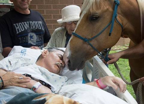 بالفيديو والصور| أحصنة تودع صاحبها في لحظاته الأخيرة بمستشفى في فيتنام
